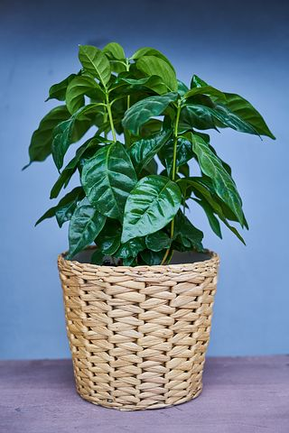 Indoor Plants For House Decoration: Types And Maintenance